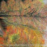 Autumn Colours II Print - Blank Greetings Card Print from Original Soft Pastel
