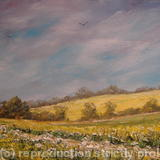 Mustard Fields of Norfolk (2011) #2082 - oil on canvas