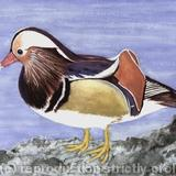 Mandarin Duck - Watercolour