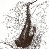 Chimp in the trees - Pen Drawing