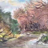Brook In Summer Woodland Ontario - Watercolor / Mixed Media