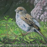 Sparrow after the rain - Acrylic on Board