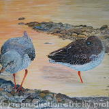 Redshank on the shore - Acrylic on Board