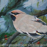 Waxwing - Acrylic on Board