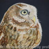 Little Owl - Acrylic on Board