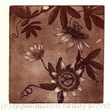 passionflower - etching