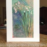 Acidanthera greetings card - Print