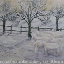 hidden Sheep in Snow (2)