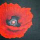 Red Poppy Black Background