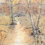 Bourne Woods - watercolour and ink