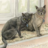 Mr Steffan's Burmese cats - Watercolour