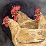 Buff Rock Trio - Signed giclee print. Supplied mounted and cellophane wrapped.