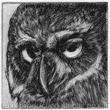 Owl - Etching