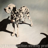 2 Dalmations - Oil on Canvas