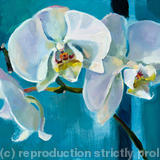 White Orchid: Trio - Oil on Canvas