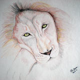 Big Cats Collection - Lion - Colour pencil on Paper
