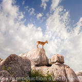 Ibex at El Torcal - photography