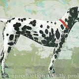 Crystal-portrait of a Dalmation dog - printed greetings card
